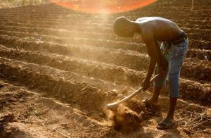 agriculteur euractiv