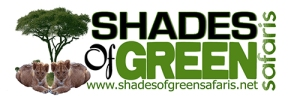 shades_of_green